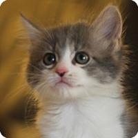 Adopt A Pet :: Dirk - Irvine, CA