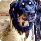 Adopt A Pet :: Harris Adoption Pending Congrats Carolyn & Dean!