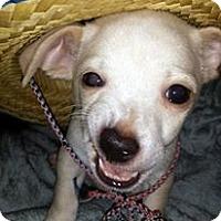 Adopt A Pet :: Iago - Austin, TX
