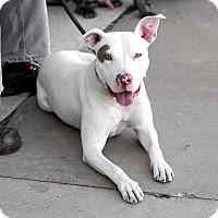 Adopt A Pet :: Keeva-Adopted! - Detroit, MI