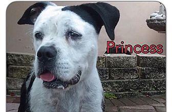 American Bulldog/Boxer Mix Dog for adoption in Miami, Florida - Princess