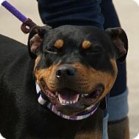 Adopt A Pet :: Penny - Dayton, OH