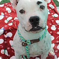 Adopt A Pet :: Louis - Auburn, CA