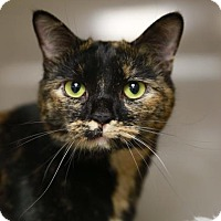 Adopt A Pet :: Bootsie - Kettering, OH