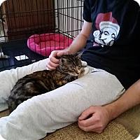 Adopt A Pet :: Bella - Rocklin, CA
