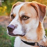 Adopt A Pet :: Blaze - Barnesville, GA