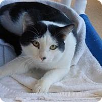 Adopt A Pet :: Noah - Evans, CO