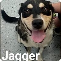 Adopt A Pet :: Jagger - Ottumwa, IA
