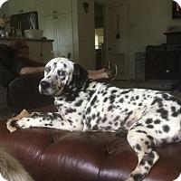Adopt A Pet :: Dexter - Tampa, FL