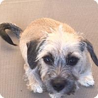 Adopt A Pet :: Dory - Rancho Cucamonga, CA