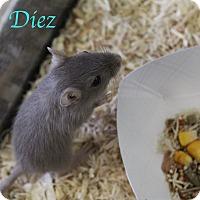 Adopt A Pet :: Diez - Bradenton, FL