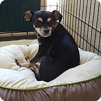 Adopt A Pet :: Speedy - Ormond Beach, FL