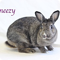 American Mix for adoption in Bradenton, Florida - Sneezy