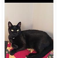 Adopt A Pet :: Amanda - Albany, NY
