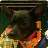 Adopt A Pet :: Auggie - Winder, GA