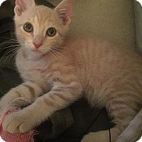 Adopt A Pet :: Flynn - Tampa, FL