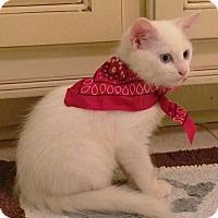 Adopt A Pet :: Casper - Mobile, AL