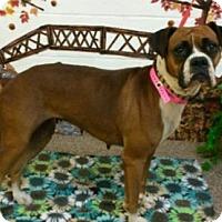 Adopt A Pet :: Betsy - Austin, TX