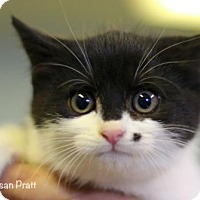 Adopt A Pet :: Marilyn - Bedford, VA