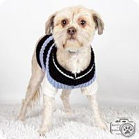 Adopt A Pet :: Chance - Colorado Springs, CO