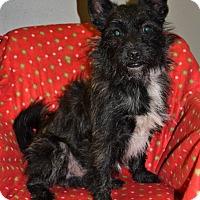 Adopt A Pet :: Tinsel - Michigan City, IN