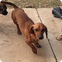 Adopt A Pet :: Boomer - Blanchard, OK