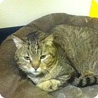 Adopt A Pet :: Aurora - Colorado Springs, CO
