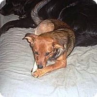 Adopt A Pet :: Tootsie - Irvington, KY