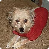 Adopt A Pet :: Violet - Raleigh, NC