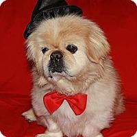 Adopt A Pet :: Jesse - Virginia Beach, VA