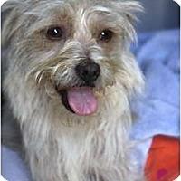 Adopt A Pet :: LULU - san diego, CA