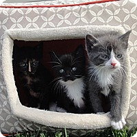 Adopt A Pet :: Luke & Leiha - Barnegat, NJ