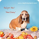Adopt A Pet :: Red Daisy