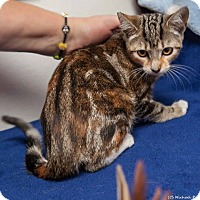Adopt A Pet :: Kalista - Davis, CA