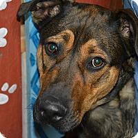 Adopt A Pet :: Titus - Meridian, ID