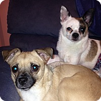 Adopt A Pet :: Oliver (NH) & Annie - Sandown, NH