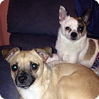 Adopt A Pet :: Oliver (NH) & Annie - Sandown, NH