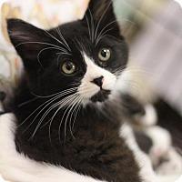 Adopt A Pet :: Torr - Sacramento, CA