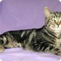 Adopt A Pet :: Della - Powell, OH