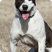 Adopt A Pet :: Chevy - Broken Arrow, OK