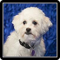 Adopt A Pet :: Calle - San Diego, CA