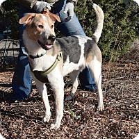 Adopt A Pet :: Jon Snow - Jersey City, NJ