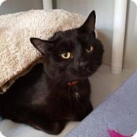 Adopt A Pet :: Bentley - Templeton, MA