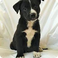 Adopt A Pet :: Tucker - Mooresville, NC