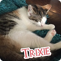 Adopt A Pet :: Trixie - Olive Branch, MS