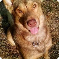 Adopt A Pet :: Jesse James - Roswell, GA