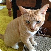 Adopt A Pet :: Carmella - Colmar, PA