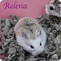Adopt A Pet :: Relena - Bradenton, FL