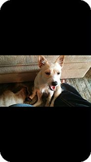 Terrier (Unknown Type, Small) Mix Dog for adoption in Matawan, New Jersey - Polyanna (adoption pending)