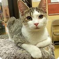 Adopt A Pet :: Teddy - Hallandale, FL